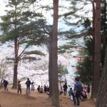 平成27年4月19日新倉山浅間公園 満開の桜 (18)