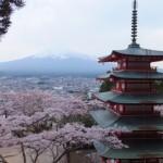 平成27年4月19日新倉山浅間公園 満開の桜 (14)