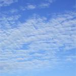 ヒツジ高積雲