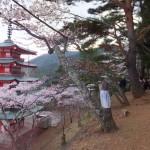 平成27年4月19日新倉山浅間公園 満開の桜 (19)