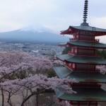 平成27年4月19日新倉山浅間公園 満開の桜 (15)