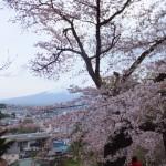 平成27年4月19日新倉山浅間公園 満開の桜 (22)