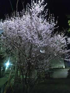 平成28年3月23日 (4)